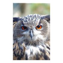 Eurasian Eagle-Owl, Uhu 2 Stationery