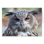Eurasian Eagle-Owl, Uhu Card