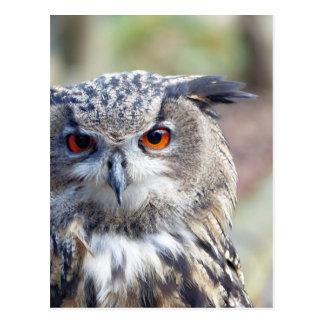 Eurasian Eagle-Owl, Uhu Postcard
