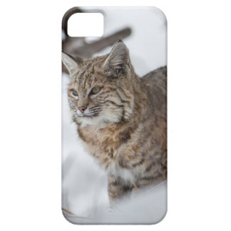 Eurasian Lynx hunting in snow iPhone SE/5/5s Case