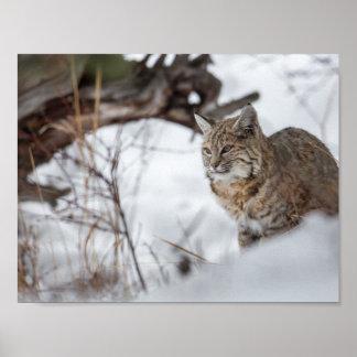 Eurasian Lynx hunting in snow Poster