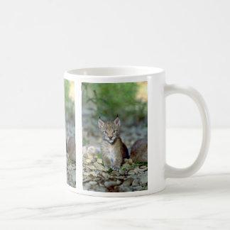 Eurasian lynx, young kitten coffee mug