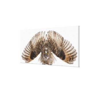 Eurasian Scops-owl - Otus scops (2 months old) 2 Canvas Print