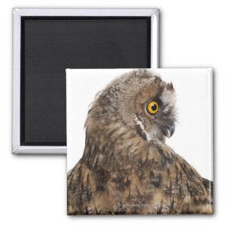 Eurasian Scops-owl - Otus scops (2 months old) 2 Inch Square Magnet