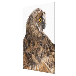 Eurasian Scops-owl - Otus scops (2 months old) Canvas Print