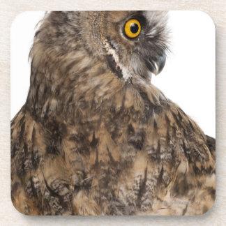 Eurasian Scops-owl - Otus scops (2 months old) Coaster