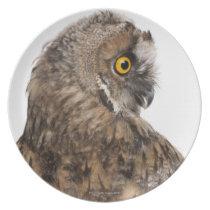 Eurasian Scops-owl - Otus scops (2 months old) Dinner Plate