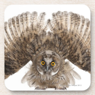 Eurasian Scops-owl - Otus scops (2 months old) Drink Coaster