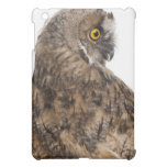 Eurasian Scops-owl - Otus scops (2 months old) iPad Mini Covers