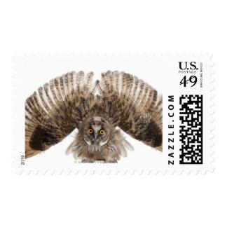 Eurasian Scops-owl - Otus scops (2 months old) Stamp