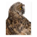 Eurasian Scops-owl - Otus scops (2 months old) Postcard