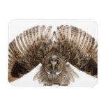 Eurasian Scops-owl - Otus scops (2 months old) Magnet