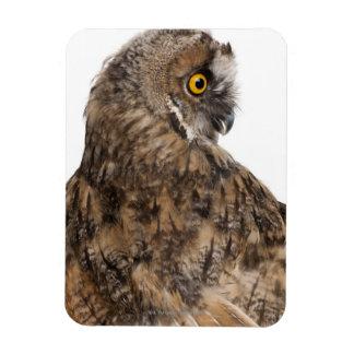 Eurasian Scops-owl - Otus scops (2 months old) Rectangular Photo Magnet