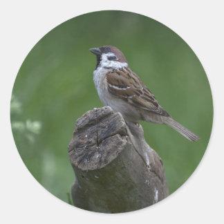 Eurasian Tree Sparrow Classic Round Sticker