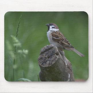 Eurasian Tree Sparrow Mousepad