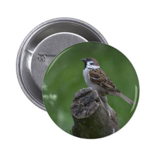 Eurasian Tree Sparrow Pinback Button