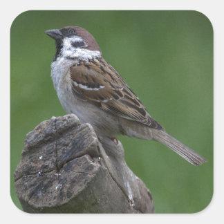 Eurasian Tree Sparrow Square Sticker
