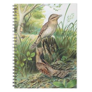 Eurasian Wryneck Vintage Bird Illustration Spiral Notebook
