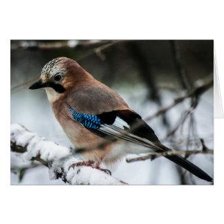 Eurasiático Jay en una tarjeta de nota de la rama