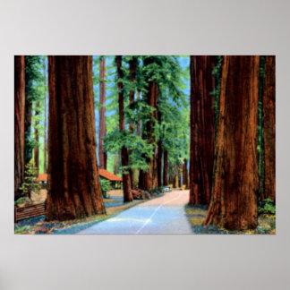 Eureka California Richardson Grove Humboldt County Poster