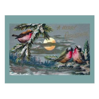 Euro Robins on Moonlit Night Vintage Christmas Postcard