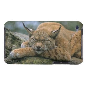 Europ�_ischer Luchs, Eurasischer Luchs (Lynx Barely There iPod Case