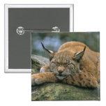 Europ�_ischer Luchs, Eurasischer Luchs (Lynx Button