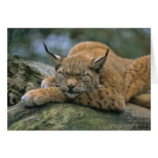 Europ�_ischer Luchs, Eurasischer Luchs (Lynx Card