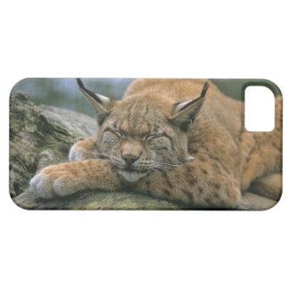 Europ�_ischer Luchs, Eurasischer Luchs (Lynx iPhone SE/5/5s Case