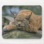 Europ�_ischer Luchs, Eurasischer Luchs (Lynx Mouse Pad