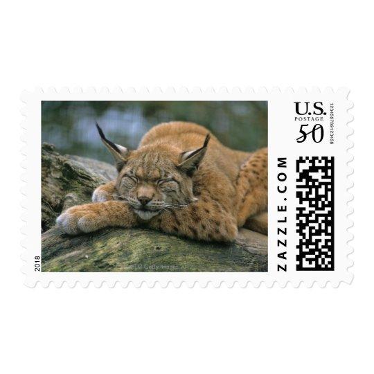Europ�_ischer Luchs, Eurasischer Luchs (Lynx Postage