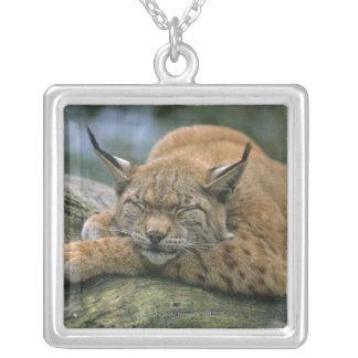 Europ�_ischer Luchs, Eurasischer Luchs (Lynx Silver Plated Necklace
