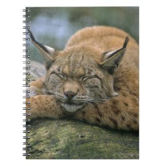 Europ�_ischer Luchs, Eurasischer Luchs (Lynx Spiral Notebook