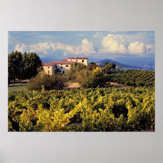 Europa, Francia, Bonnieux. Los viñedos cubren Póster