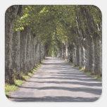 Europa, Francia, Cereste. Los árboles alinean este Calcomanías Cuadradas Personalizadas