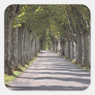 Europa, Francia, Cereste. Los árboles alinean este Pegatina Cuadrada