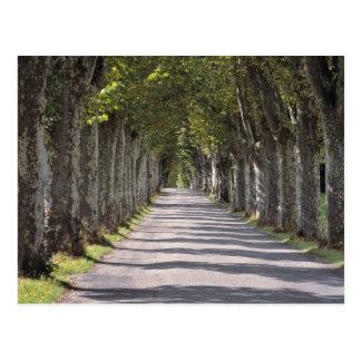 Europa, Francia, Cereste. Los árboles alinean este Postal
