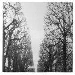 Europa, Francia, París. Árboles del invierno, Marc Azulejo Cuadrado Grande