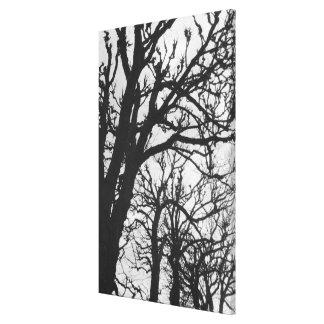 Europa, Francia, París. Árboles del invierno, Marc Lienzo Envuelto Para Galerías