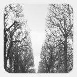 Europa, Francia, París. Árboles del invierno, Pegatina Cuadrada