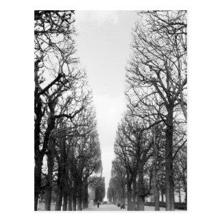 Europa, Francia, París. Árboles del invierno, Tarjetas Postales