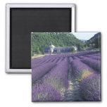 Europa, Francia, Provence. Campos de Lavander Imán De Frigorifico