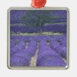 Europa, Francia, Provence, Sault, campos 2 de la l Ornamente De Reyes
