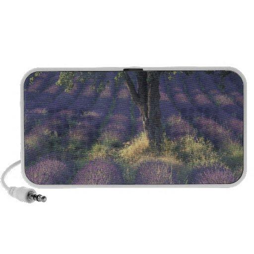 Europa, Francia, Provence, Sault, lavanda iPod Altavoces