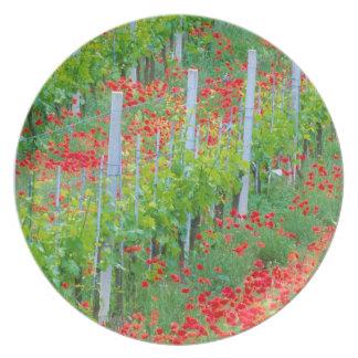 Europa, Italia, Toscana. Amapolas rojas coloridas  Plato De Cena