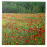 Europa, Italia, Toscana, amapolas rojas en campo Azulejos