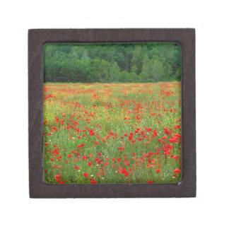 Europa, Italia, Toscana, amapolas rojas en campo Caja De Recuerdo De Calidad