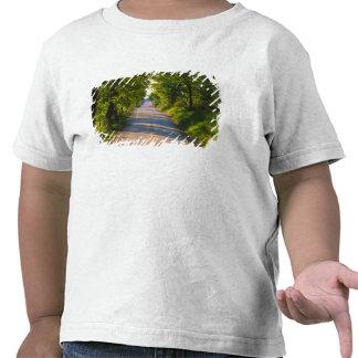 Europa, Italia, Toscana, árbol alineó el camino Camiseta