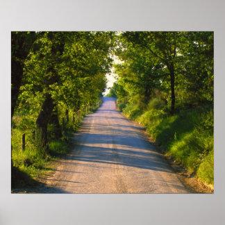 Europa, Italia, Toscana, árbol alineó el camino Póster