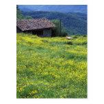 Europa, Italia, Toscana, Siena, Chianti. Tarjeta Postal